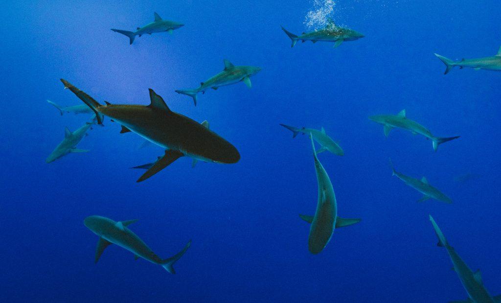 Haie im Wasser